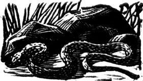 wood-engraving original print: The Snake for Mountains and Molehills by Frances Cornford